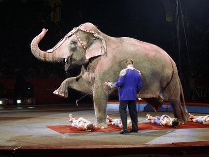 Цирковые трагедии