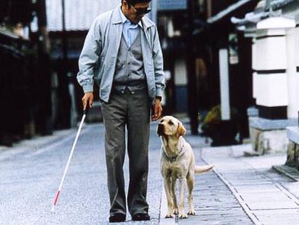Фактор жизни. Зоотерапия и животные-инвалиды