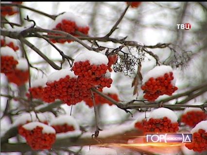 Город новостей. Эфир от 05.12.2013 19:30