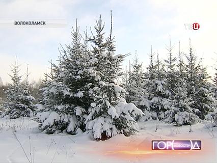 Город новостей. Эфир от 12.12.2013 14:50