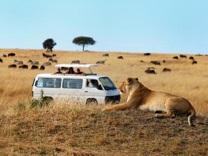 Африка. Опасная реальность