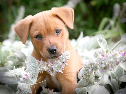 Самые милые собаки