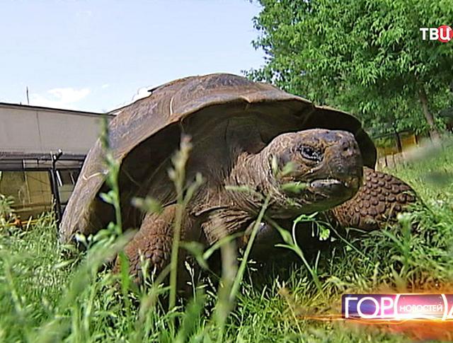 Черепаха в московском зоопарке