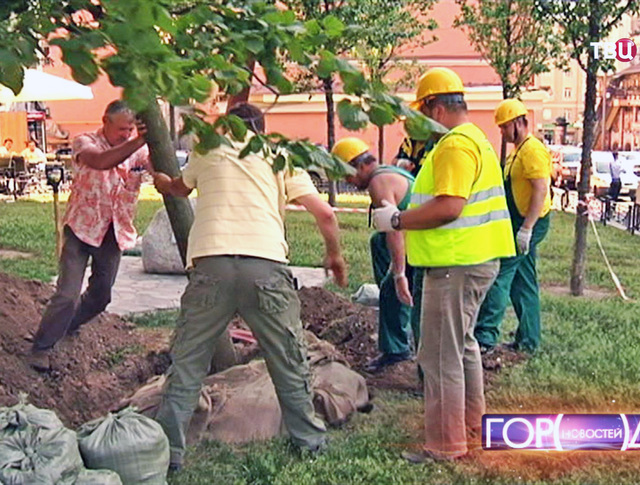 Посадка дерева в Москве