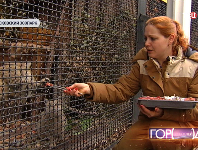 Сотрудник зоопарка кормит кошек