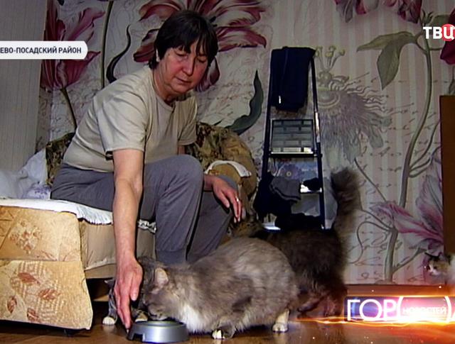 Хозяйка кошек
