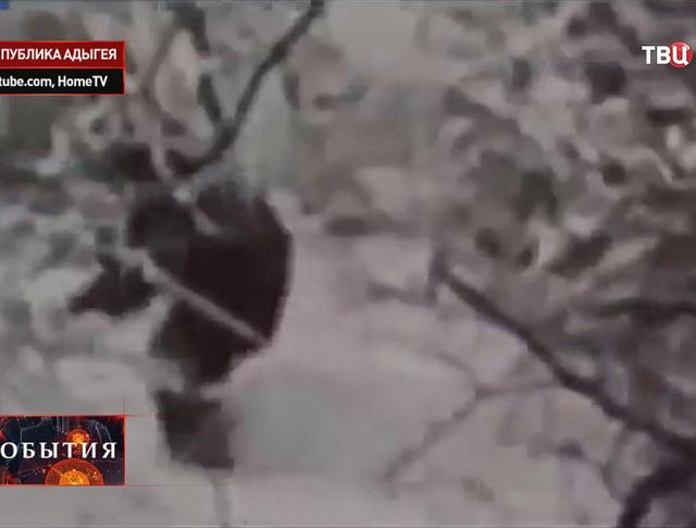 Снежный человек в Адыгее