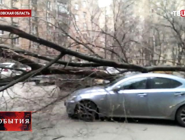 Последствия урагана в Московской области
