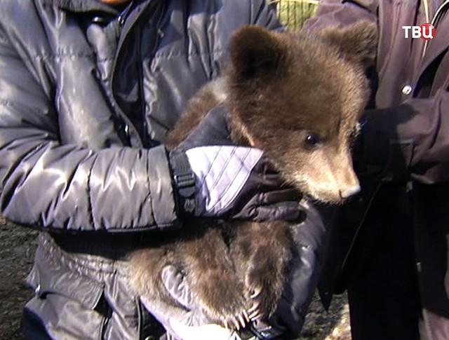 Медвежонок на руках