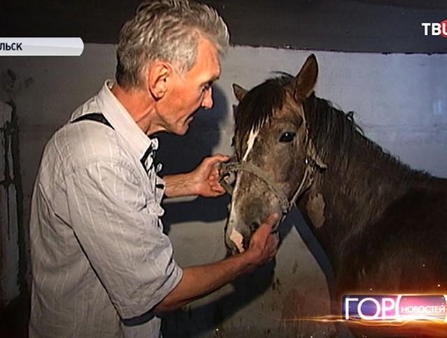 Пострадавшая лошадь в Подольске