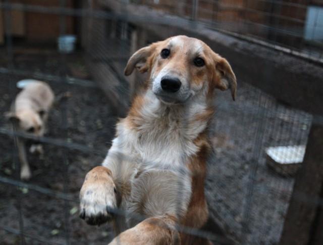 Собаки в одном из вольеров приюта для животных