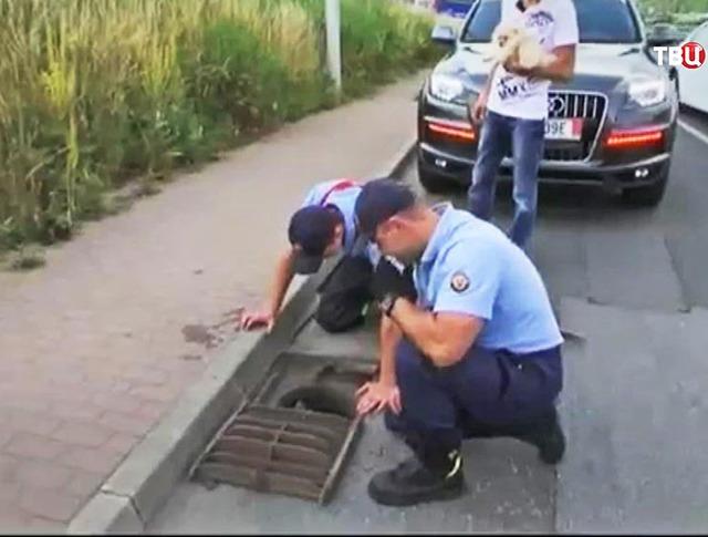 Полицейские спасают утят из канализации