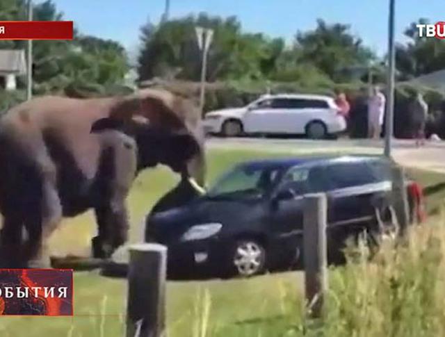 Цирковые слоны в Дании