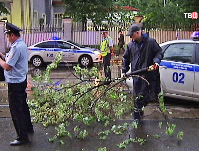 Сотрудники ДПС и упавшее дерево