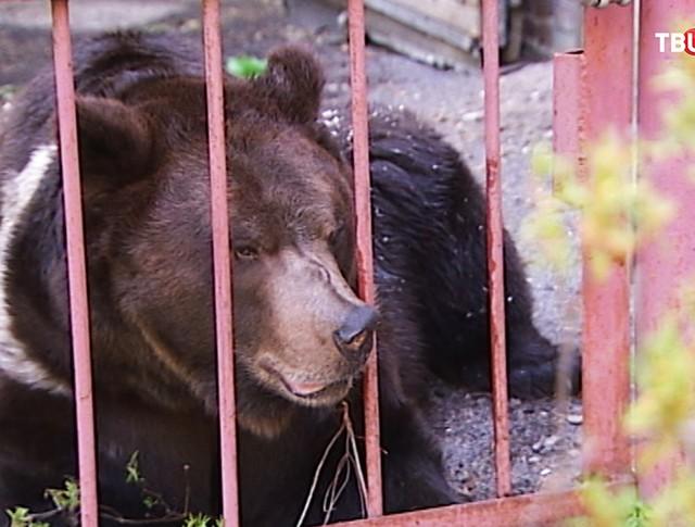 Медведь по кличке Малыш