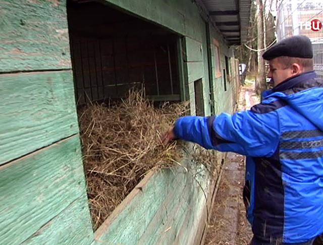 Центр реабилитации диких животных