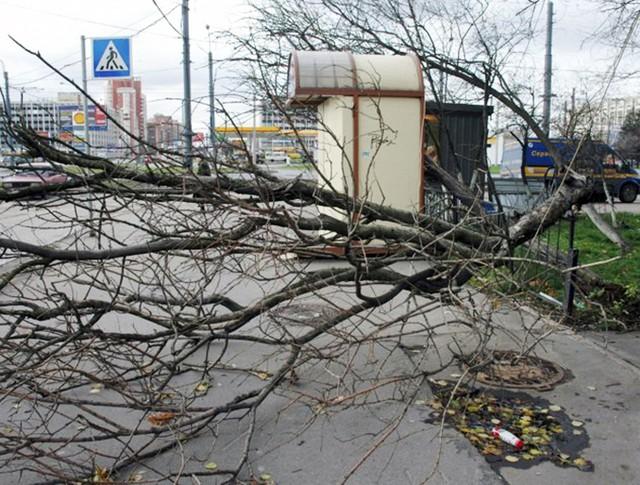 Штормовой ветер в Санкт-Петербурге повалил деревья