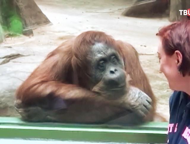 Посетитель зоопарка у вольера