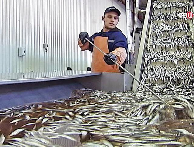 Рыбный комбинат