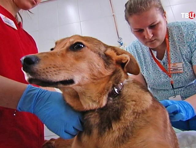 Ветеринары осматривают собаку