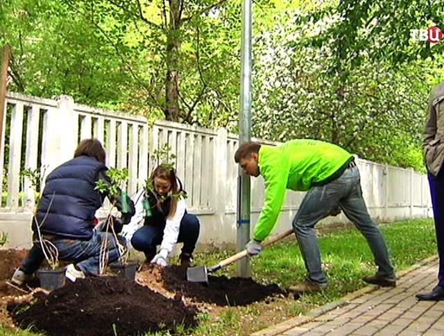 Работы по озеленению