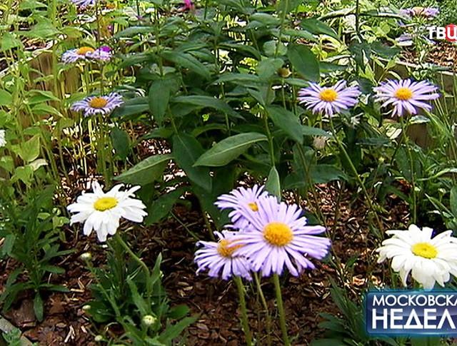 """Международный фестиваль садов и цветов в парке """"Музеон"""""""