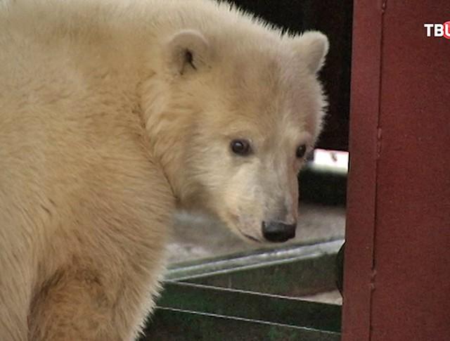 Медвежонок Ника
