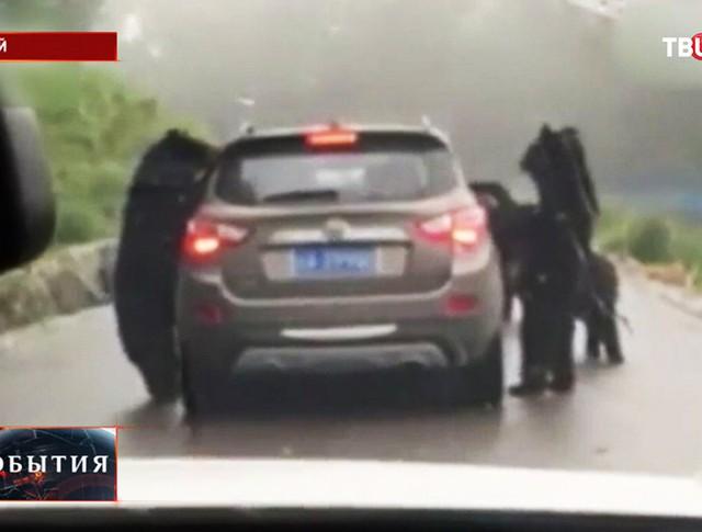 Медведи на трассе в Китае