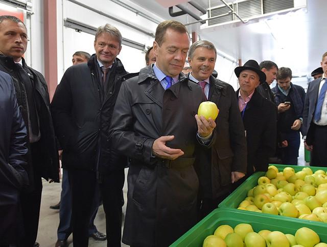 """Дмитрий Медведев в агрокомплексе """"Сад-гигант Ингушетия"""""""