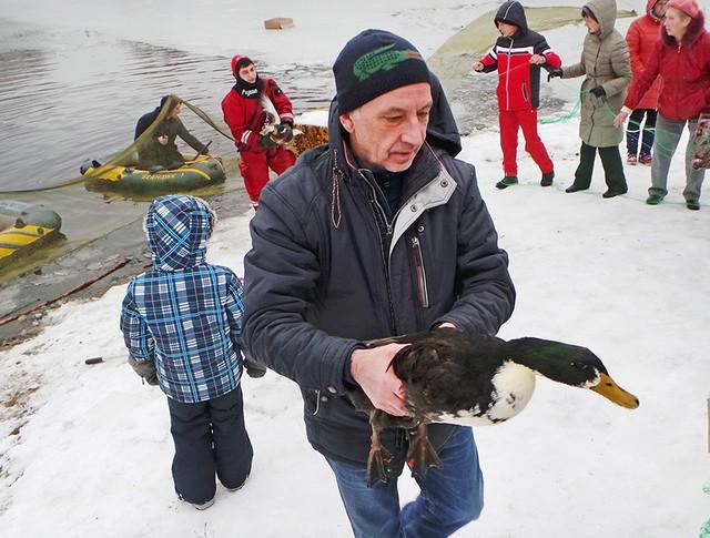 Спасение уток из замерзающего пруда в Москве