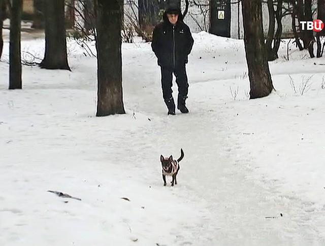 Мужчина гуляет с собакой