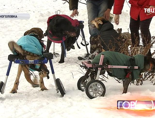 Собаки-инвалиды