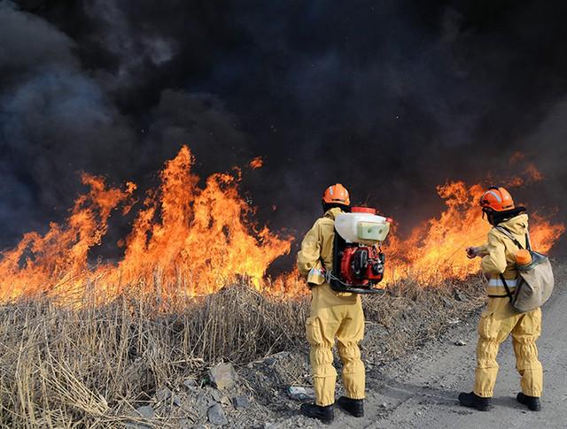 Устранение лесного пожара
