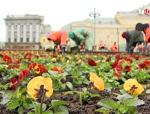 Работы по озеленению в Москве