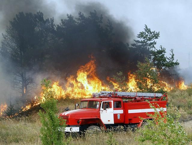 Пожарные борются с лесными пожарами