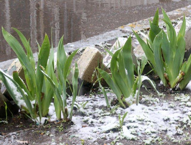 Мокрый снег в Москве