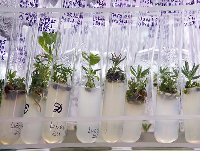 """Образцы растений в научно-техническом центре """"Биотрон"""""""