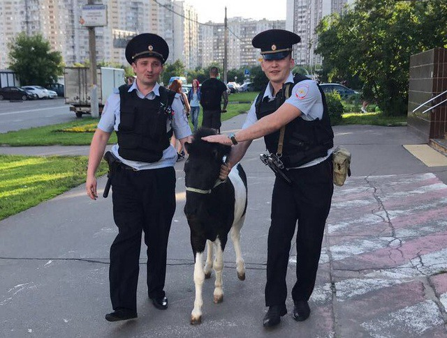 Сотрудники полиции поймали сбежавшего пони