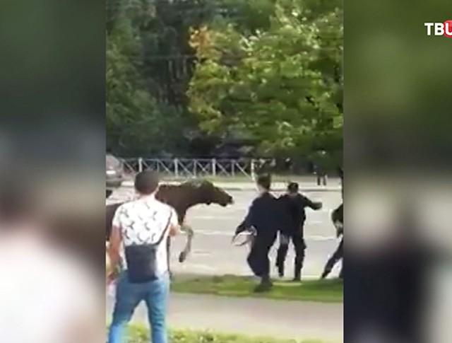 """Лось у станции метро """"Выхино"""""""