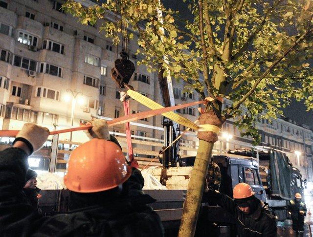 Высадка деревьев в Москве