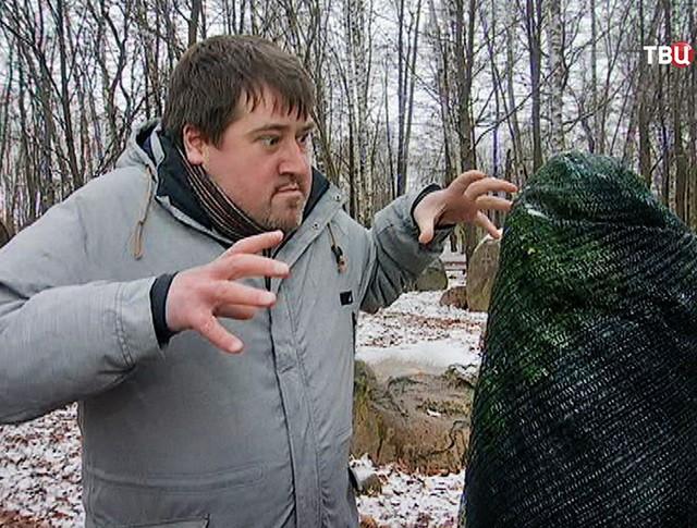 Укутанные на зиму туи испугали жителей