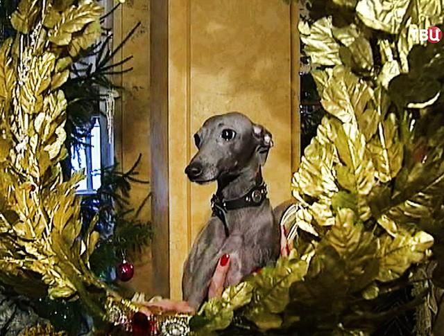 Бал собак в Гатчинском дворце в Петербурге