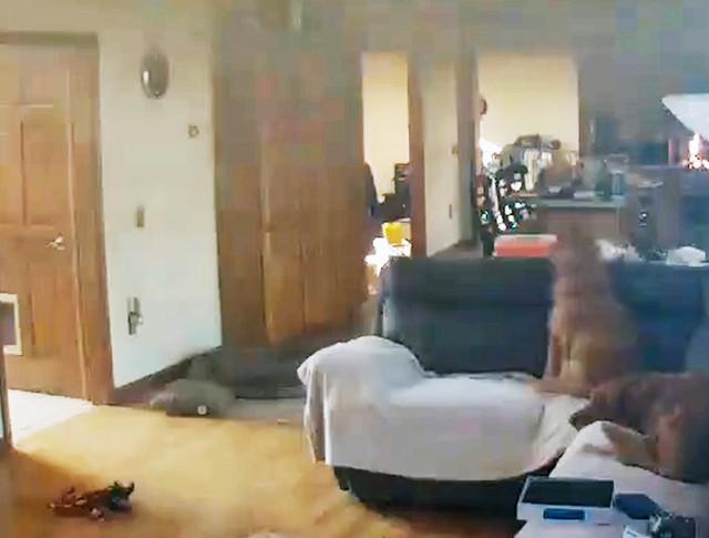 Собака украла блины и чуть не спалила дом в США