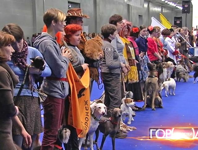 Выставка собак в Красногорске