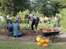 Мишель Обама собирает урожай овощей