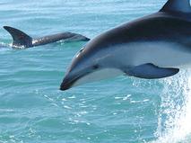 Повелитель дельфинов