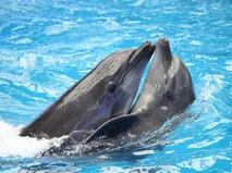 """Повелители. Анонс. """"Повелитель дельфинов"""""""