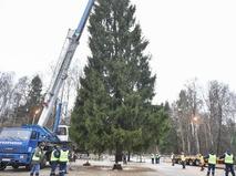 В Домодедовском районе Подмосковье срубили главную ёлку страны