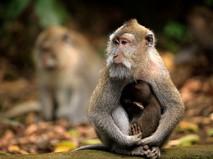 """Наши любимые животные. """"Приматы и нумизматы"""""""
