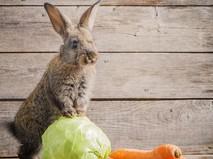 """Наши любимые животные. """"Хитрый Братец Кролик"""""""